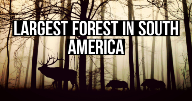 Largest forest in south America