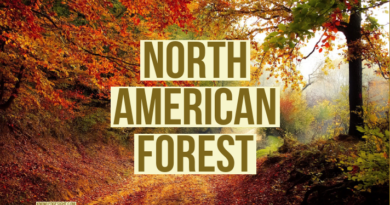 North American Forest