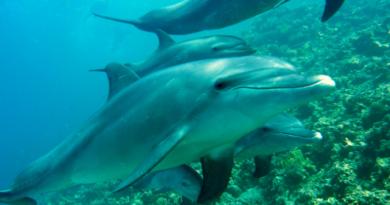 Amazingfactsaboutdolphins