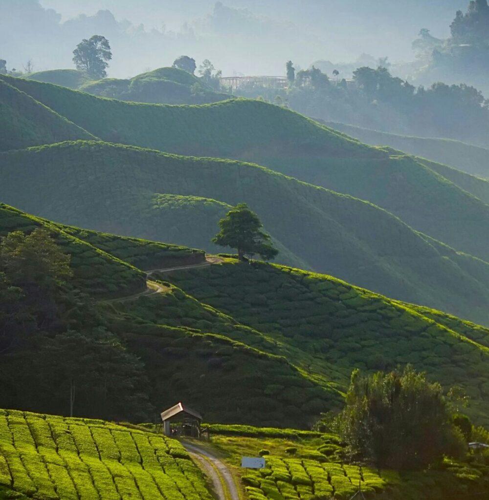 Darjeeling,