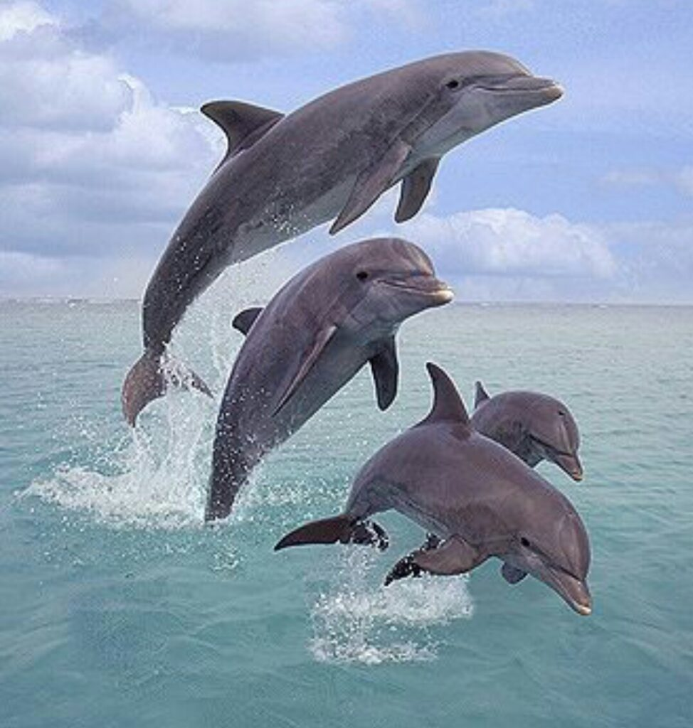 facts About dolphins that nobody knows