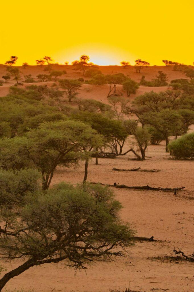 Kalahari Desert Southern