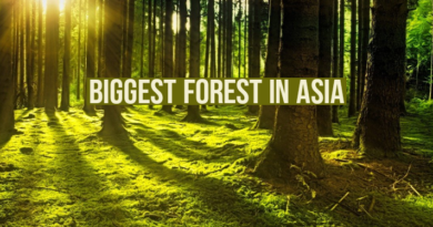 biggest forest in Asia