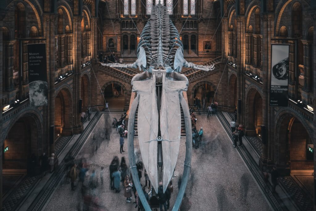 The natural history museum, Best museums in London