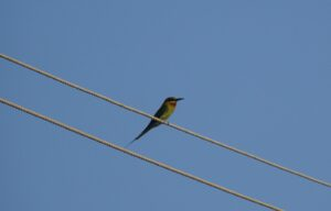 yellow bird on wire