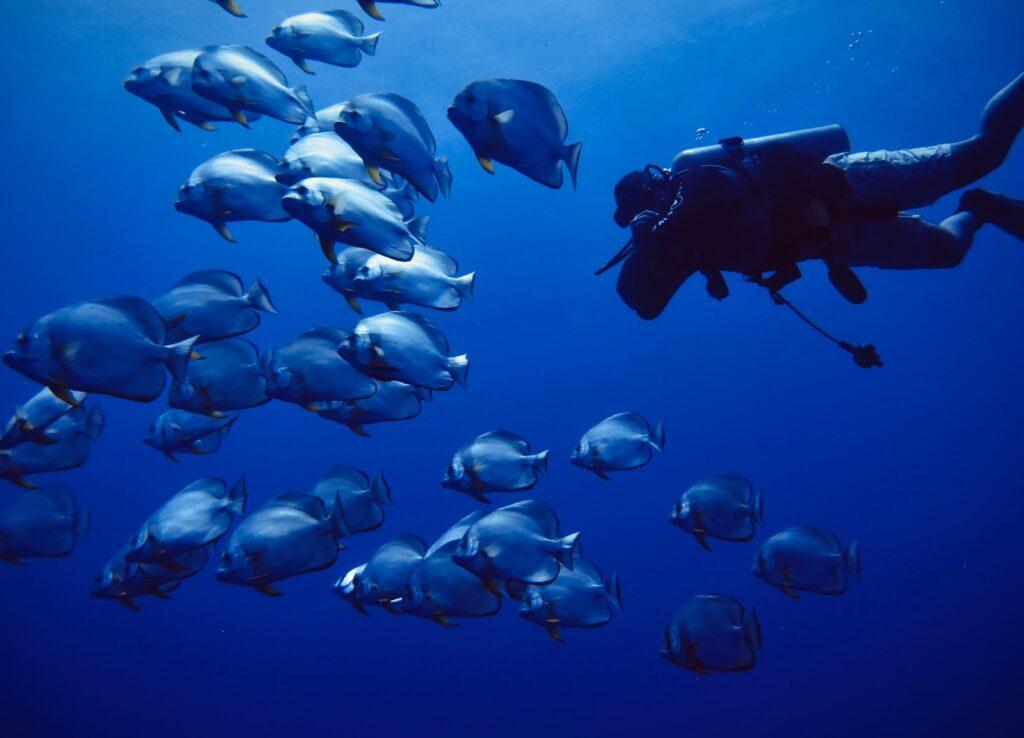 group of people in black wet suit under water