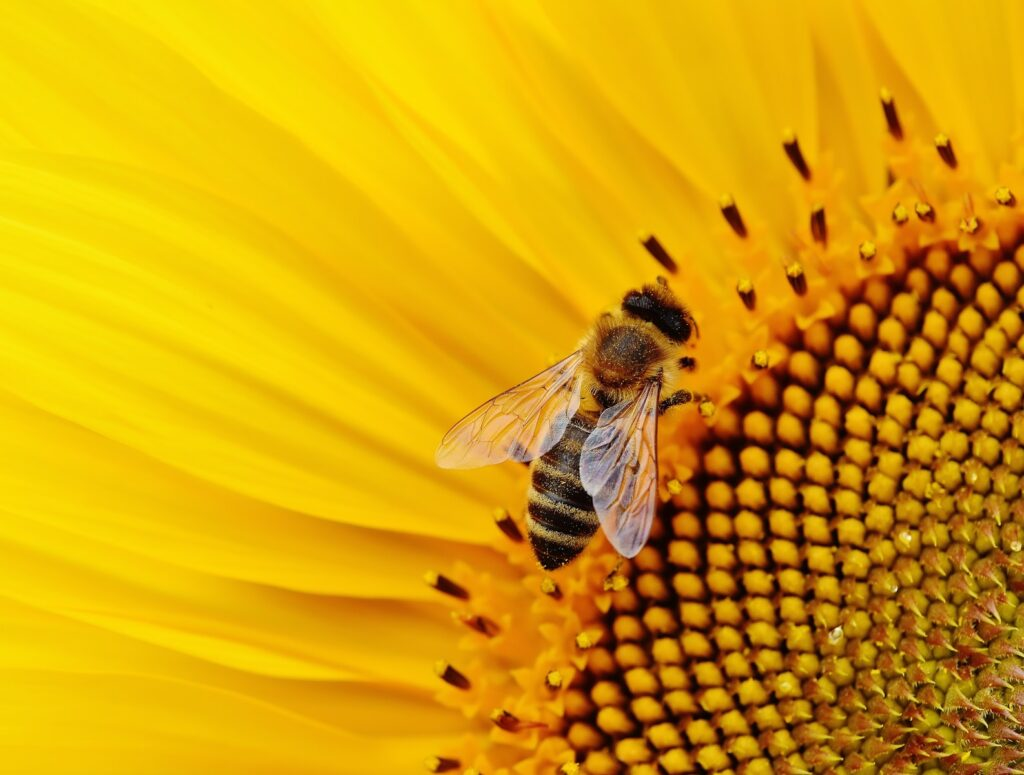 Facts about Honey Bee