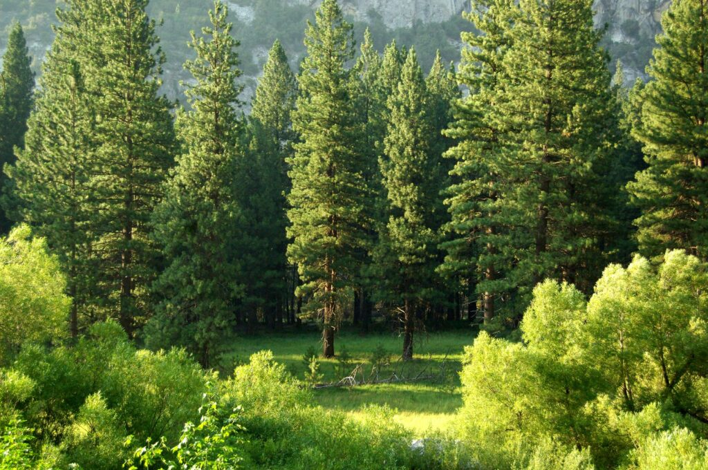 facts about trees